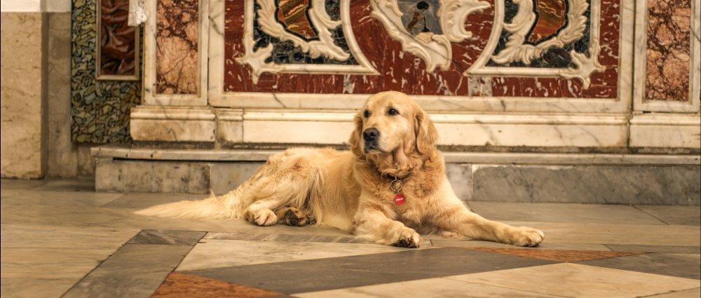 Quando l 39 attore un cane la regista di italo ci svela i - Quando fare il primo bagno al cane ...