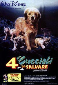 4 cuccioli da salvare